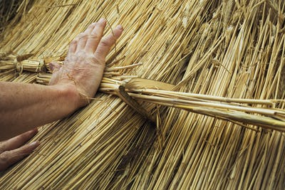 Close up of a man thatching a roof, fastening a bundle of straw with a hazel wood peg.