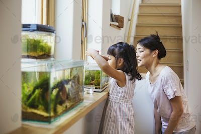 Family home. A  mother and daughter looking at the fish in a fish tank on a windowsill.