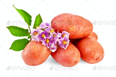 Potatoes red with a flower