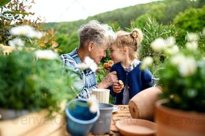 Senior grandmother with small granddaughter gardening on balcony in summer, eating