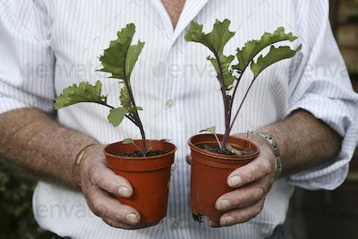 A gardener holding two pots with beetroot plants.