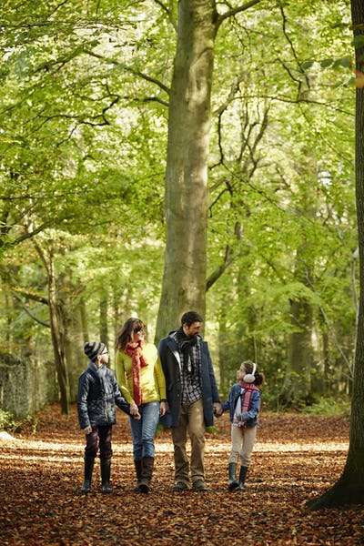 A family walking hand in hand in beech woods in autumn.