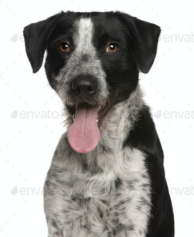 Mixed-breed (1 year old)
