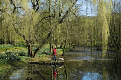A woman and dog on a jetty on a lake, under a large weeping willow tree.