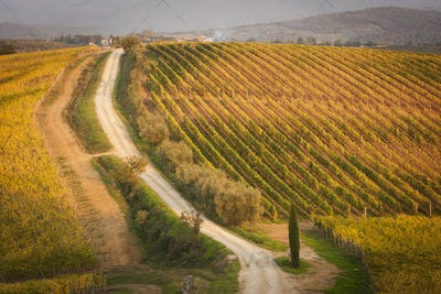 High angle view of a dirt road through a vineyard.