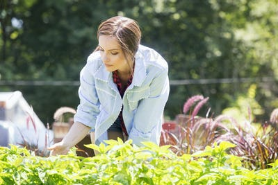 A young woman standing in a garden or commercial plant nursery, tending young perennial plants.