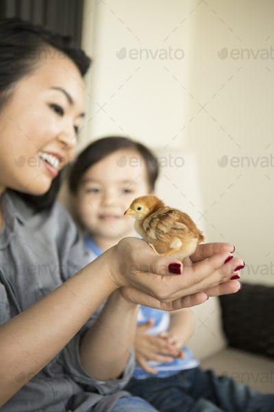 Smiling woman holding a tiny chick in her hands, her young son watching.