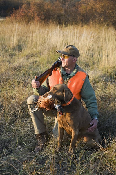 A bird hunter and his trained dog with a dead pheasant in its mouth. Retriever.