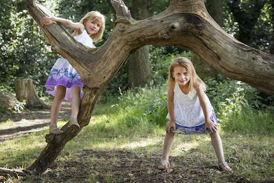 Two young girls climbing a tree in a forest.