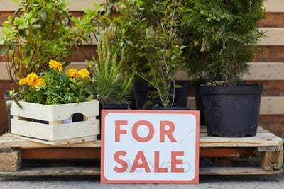 Background of Garden Plants For Sale