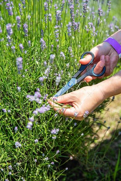 Woman hand picking flower