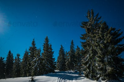 Bewitching magical landscape of snowy tall fir