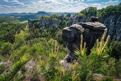 Panoramic view of famous Bastei national park Saxon Switzerland, Germany. Pine tree on stone edge