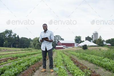A man in a farm field inspecting the lettuce crop, using a digital tablet.