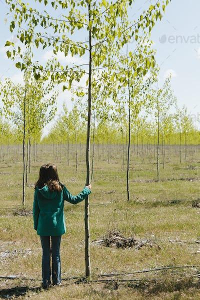 Ten year old girl standing holding poplar tree on tree farm, Oregon.