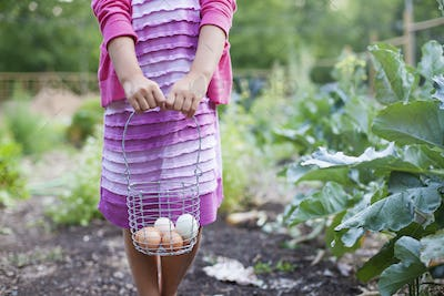 A girl holding a wire basket of eggs, white and brown, in an organic vegetable patch.