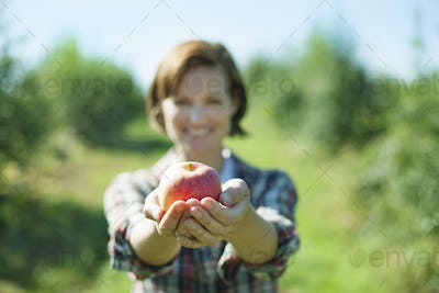 A woman holding an apple in her cupped hands in the orchard at a fruit farm.