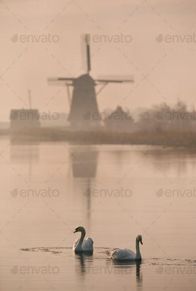Swans on the water by a historic windmill in Texel, Netherlands