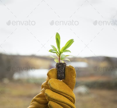 A gloved hand holding a small new seedling with two sets of green leaves.