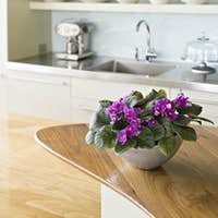A traditional farmhouse kitchen with a island and a bowl of African violet plants.