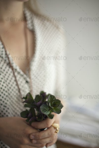 A woman holding a small bunch of plant leaves. Cologne mint leaves.