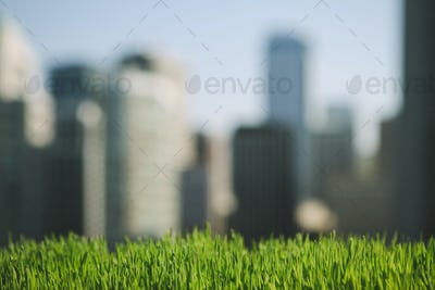 Lush, green grass in foreground, and the Seattle city skyline in the distance.