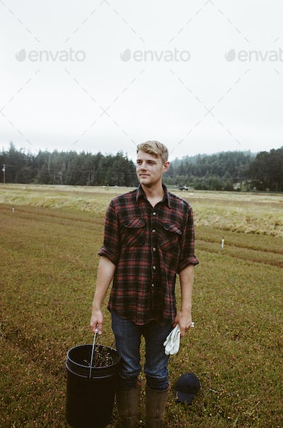 A young man working on the land, harvesting the crop on a cranberry farm in Massachusetts.