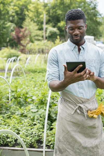 An organic horticultural nursery and farm outside Woodstock. A man using a digital tablet.