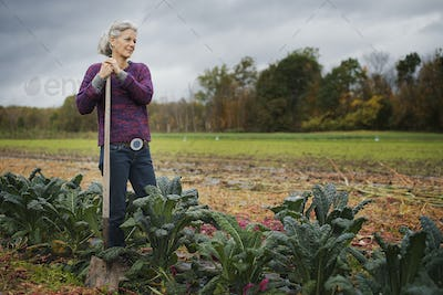 Organic Farmer at Work. A woman leaning on a hoe among a line of cabbages.
