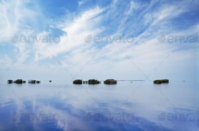 Mangrove islets on coral reef, Dangriga, Belize