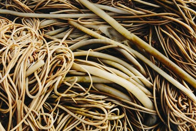 Pile of bull kelp seaweed, close up