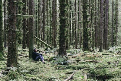 Man sitting among moss-covered trees in lush temperate Hoh rainforest.