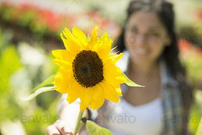 A farm growing and selling organic vegetables and fruit. A woman holding a large sunflower.