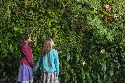 Two children holding hands and looking up at a wall covered with growing foliage in a city park