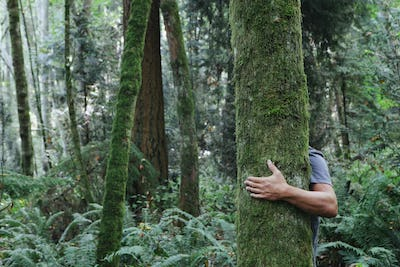 Man hugging tree in lush, green forest