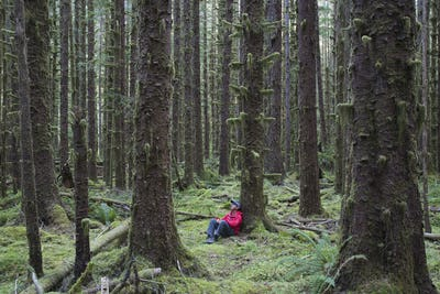 Man sitting among moss-covered Hemlock and Spruce trees in lush temperate rainforest
