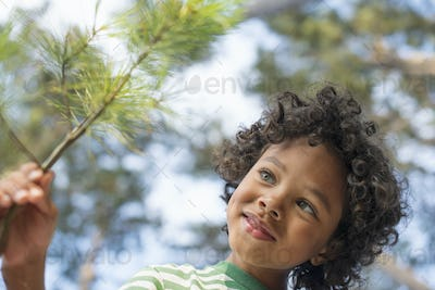 Trees on the shores of a lake. A child among the trees, holding a branch with yellow pine needles.