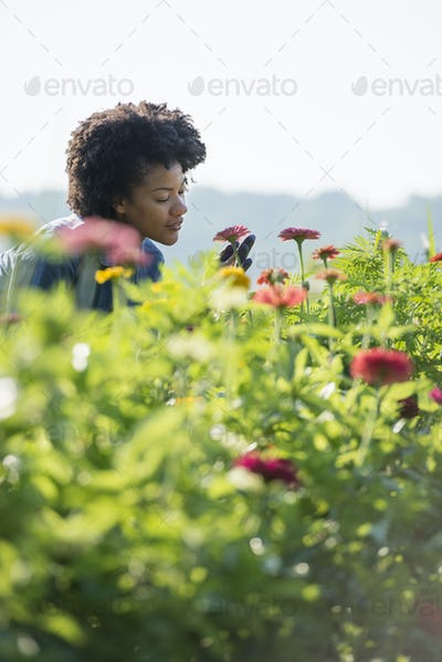 A woman standing among the flowers growing in the fields.