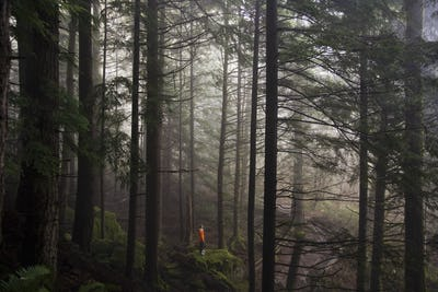 A man stands on a mossy rock overlooking a thick forest on a foggy morning