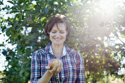 A woman in a plaid shirt holding a large fresh picked apple in the orchard at an organic fruit farm.