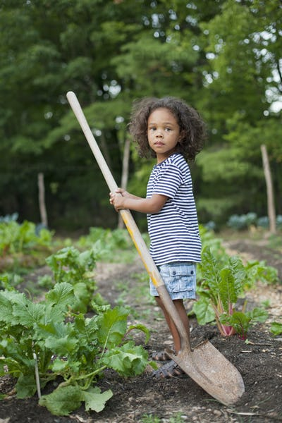 A young African American boy holding a long handled space, working in an organic vegetable garden.