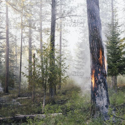 A controlled forest burn set to encourage regrowth and a more sustainable forest ecosystem
