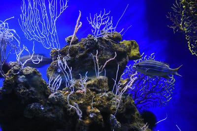 Marine life in the aquarium