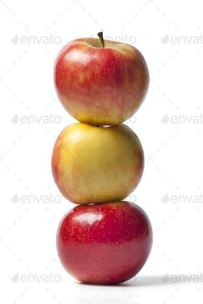 Three Elstar apples