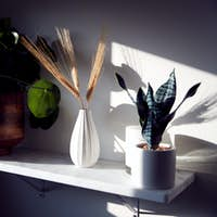 Close Up Of House Plants On Shelf In Stylish Contemporary Home