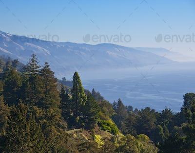 Treed Hillside Near the Ocean