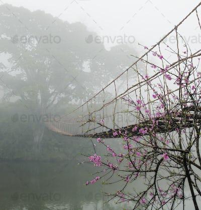 Footbridge Suspended Over a Foggy River