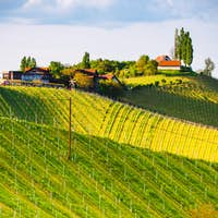 Austria Vineyards Leibnitz area south Styria travel spot. Original image