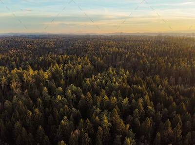 Autumn forest aerial view from above