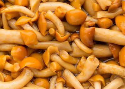 Shimeji mushrooms brown fumgi varieties Background.